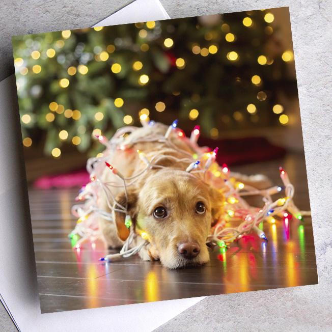 Animal Charity Christmas Cards